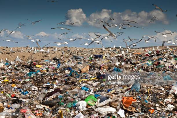 Birds flying over landfill