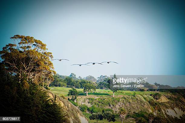 Birds Flying Over Landscape Against Sky