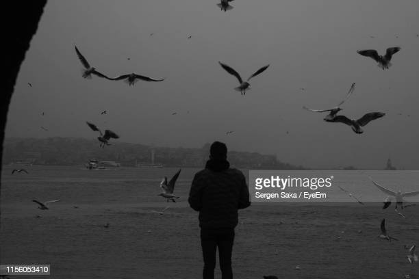 birds flying over man against sea - saka stock pictures, royalty-free photos & images