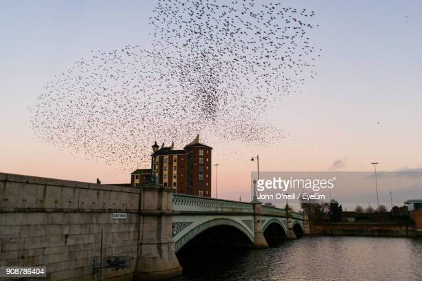 Birds Flying Over River Against Sky During Sunset