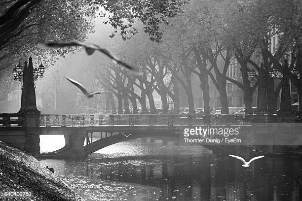 birds flying over river by arch bridge in city - デュッセルドルフ ストックフォトと画像