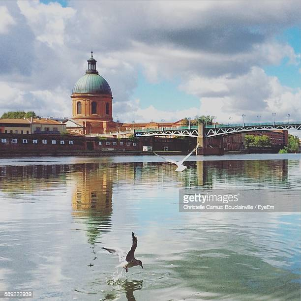 birds flying over river by buildings against cloudy sky - toulouse stock pictures, royalty-free photos & images