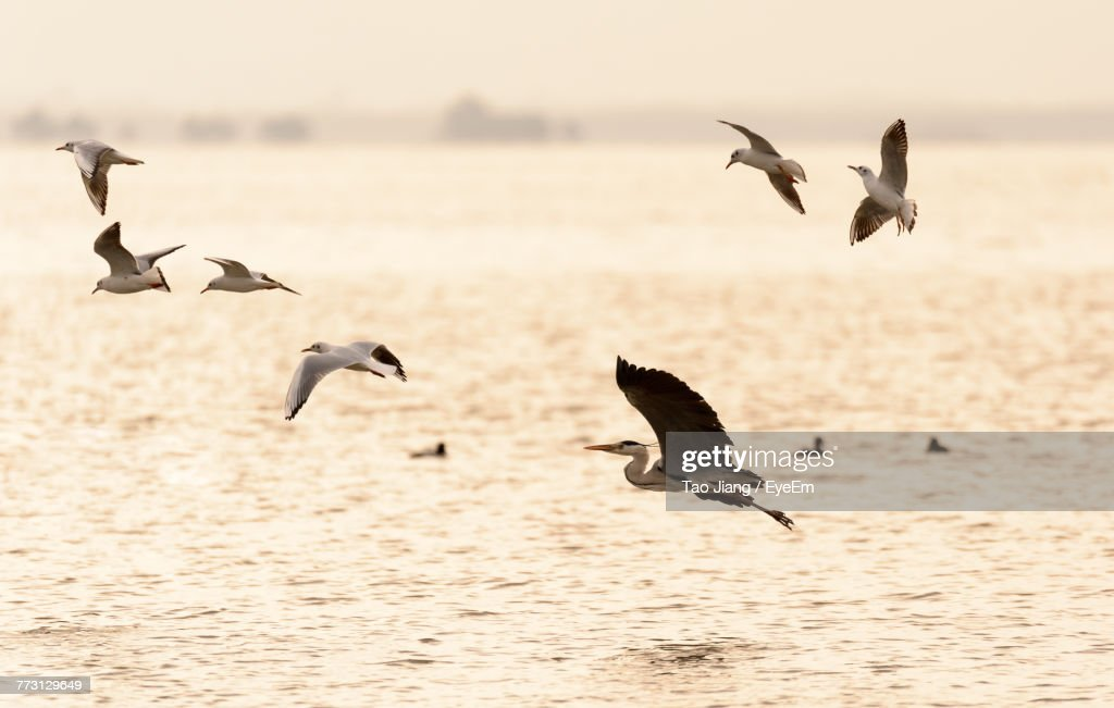 Birds Flying Over River : Photo