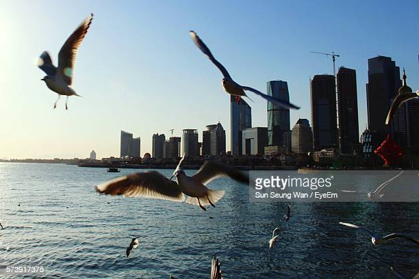 Birds Flying Over River With Buildings Against Clear Sky