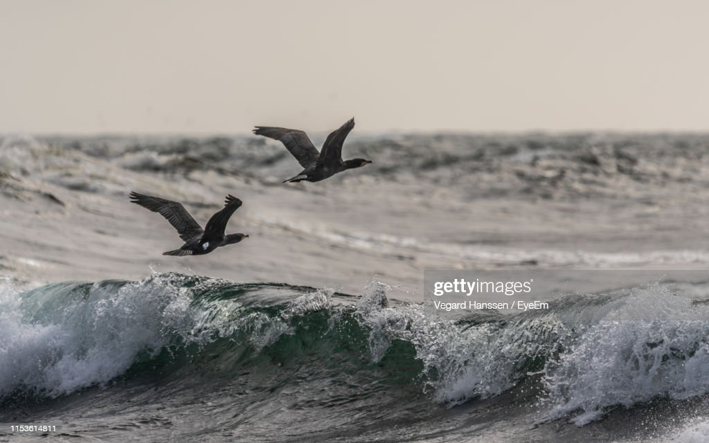Birds Flying Over Sea Against Clear Sky During Sunset : Stock Photo