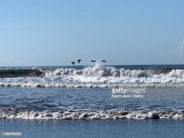 birds flying over sea against clear sky - naomi jarvis stock pictures, royalty-free photos & images