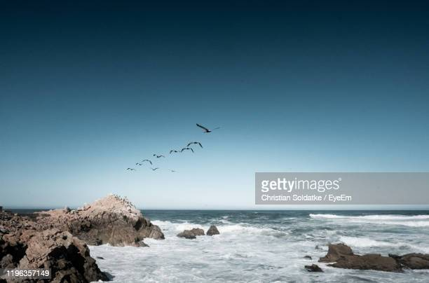 birds flying over sea against sky - christian soldatke stock pictures, royalty-free photos & images