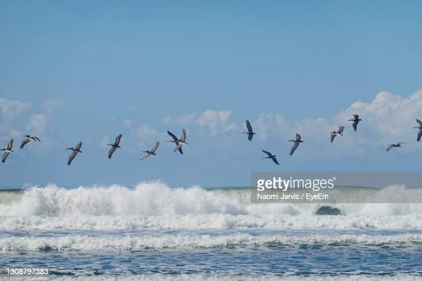 birds flying over sea against sky - naomi jarvis stock pictures, royalty-free photos & images