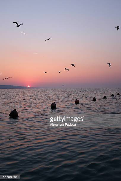 Birds flying over sea at sunrise