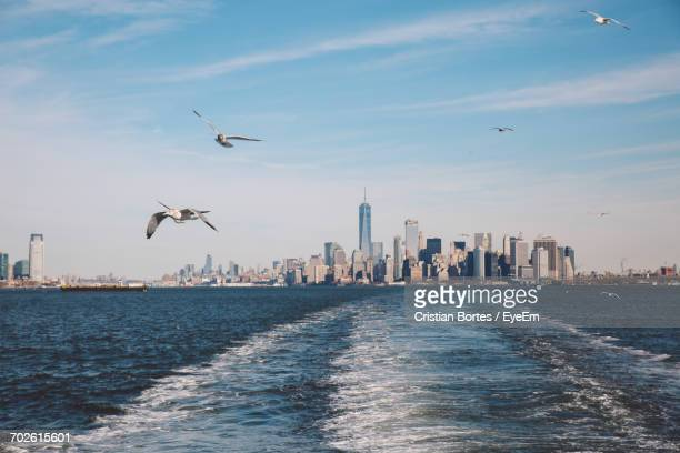birds flying over sea in city against sky - bortes stock-fotos und bilder