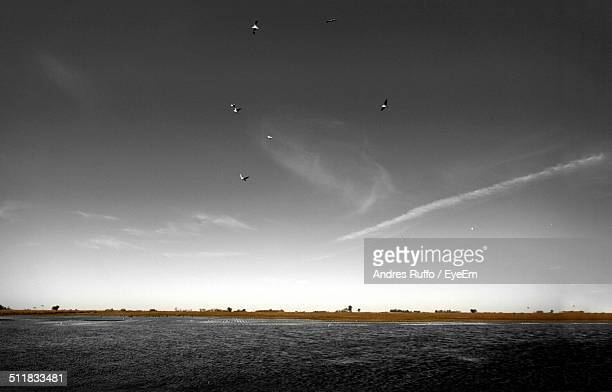 birds flying over sea - andres ruffo bildbanksfoton och bilder