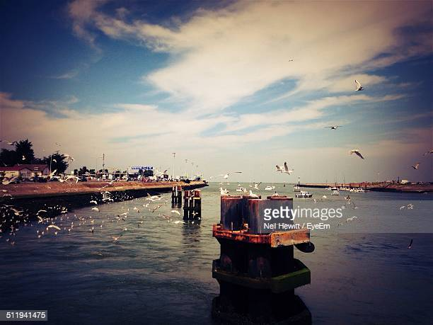 birds flying over sea - ouistreham stock pictures, royalty-free photos & images