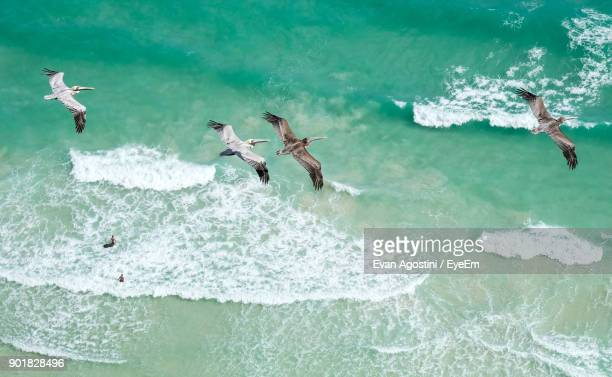 birds flying over sea - evan agostini stock pictures, royalty-free photos & images