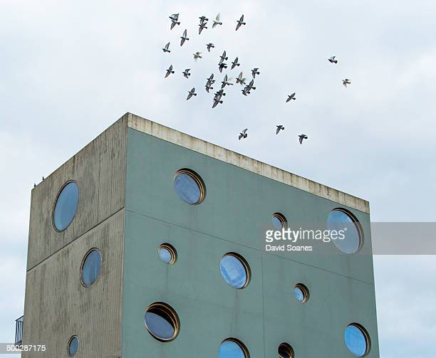 CONTENT] Birds flying over the Sean O'Casey community centre Dublin