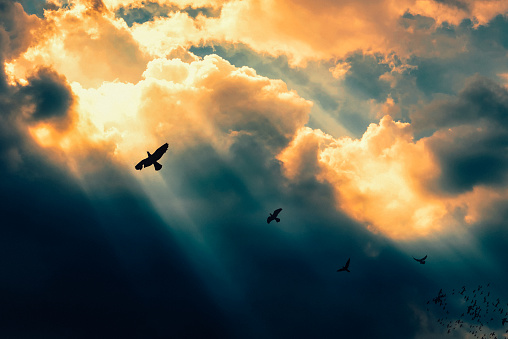 Birds flying to the light. Successful concept. Leadership and fellowship concept. - gettyimageskorea