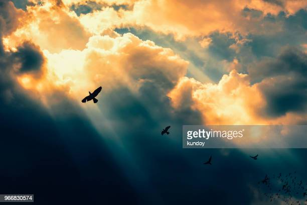 birds flying to the light. successful concept. leadership and fellowship concept. - comemoração conceito imagens e fotografias de stock