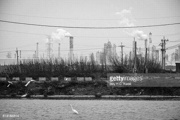 Birds forage for food in the river as Mailiao sixth naphtha cracker industries stands at the background on February 17 2016 in Kaohsiung Taiwan...
