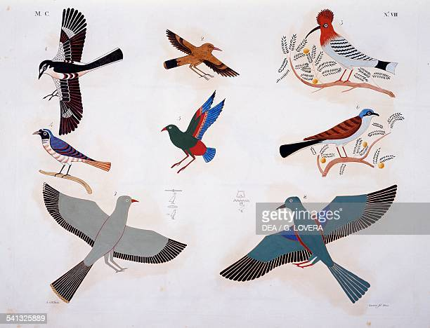 Birds from the tombs of Beni Hasan Plate VIII from The monuments of Egypt and Nubia civil monuments 18321844 by Ippolito Rosellini