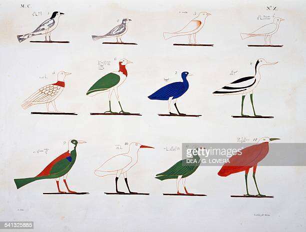 Birds from the tombs of Beni Hasan Plate X from The monuments of Egypt and Nubia civil monuments 18321844 by Ippolito Rosellini