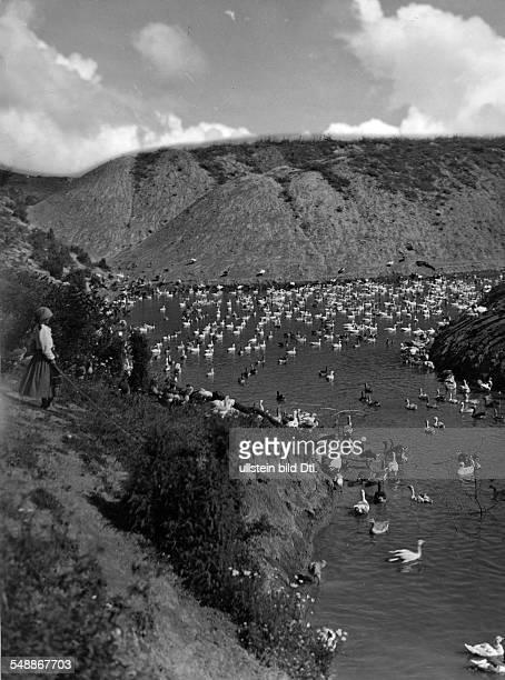 Birds in a lake - ca. 1933 - Photographer: Rudolf Balogh Vintage property of ullstein bild