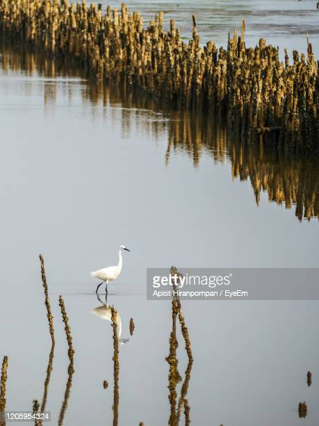 birds in a lake - apisit hiranpornpan stock pictures, royalty-free photos & images