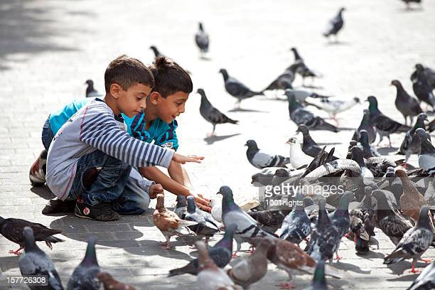 Birds in Beirut, Lebanon