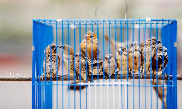 Birds in birdcage