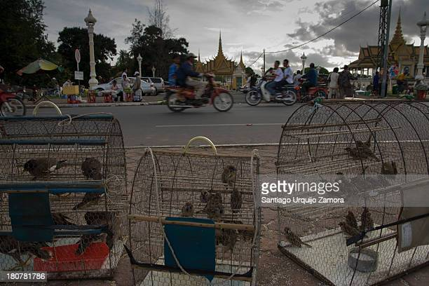 CONTENT] Birds in cages for sale at the promenade along Tonle Sap in Phnom Penh Cambodia The spiritual practice of merit release is freeing captive...