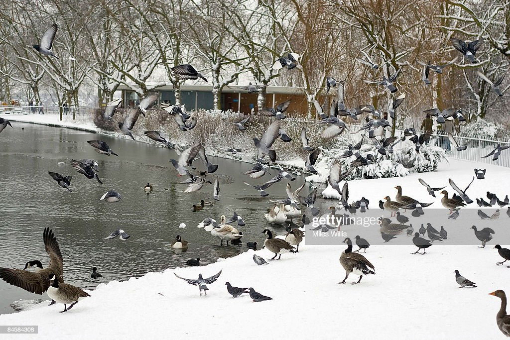 Heavy Snow Falls Across United Kingdom : News Photo