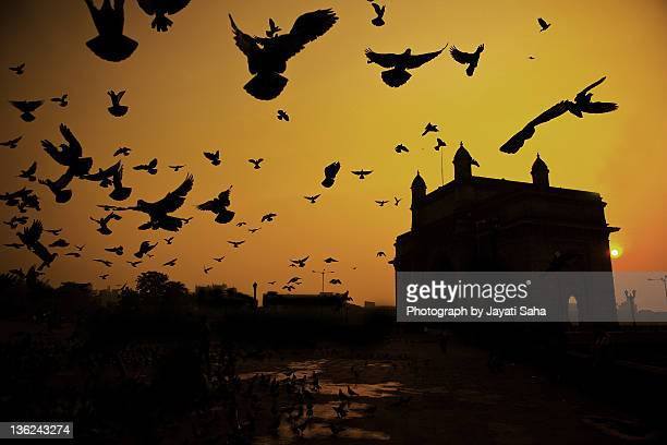 Birds in flight at Gateway of India