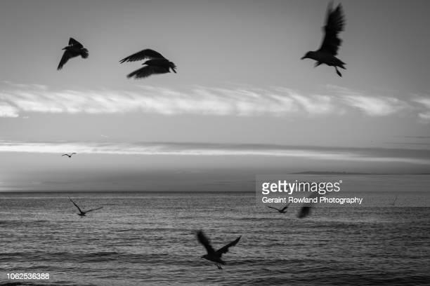 Birds in Flight in Black and White