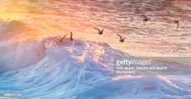 birds in flight over foamy wave at jones beach, long island - atlantik stock-fotos und bilder