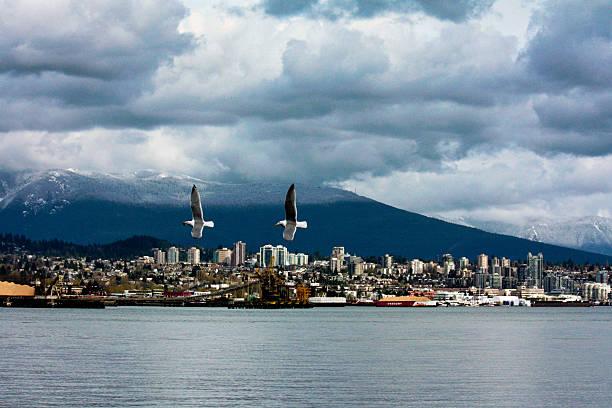 Birds In Flight Over Vancouver Skyline Wall Art