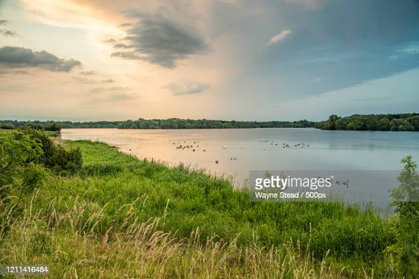 birds in reservoir in pitsford, daventry district, northamptonshire, england, uk - northamptonshire - fotografias e filmes do acervo