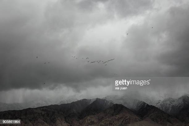 Birds in the sky above mountain peaks,Tashkurgan,China