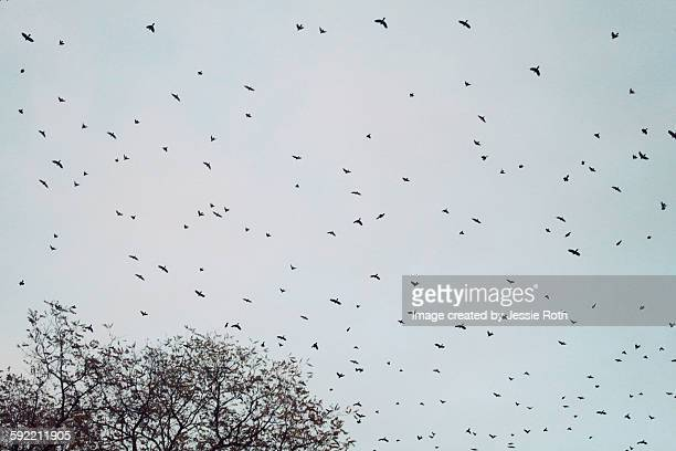 birds in the sky - rye new york stockfoto's en -beelden