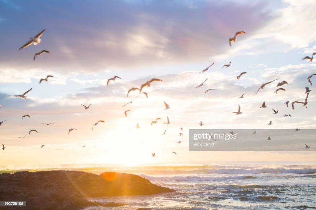 Birds in the sunrise : Stock-Foto