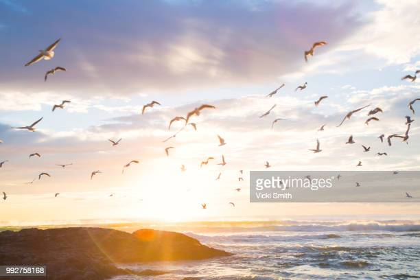 Birds in the sunrise