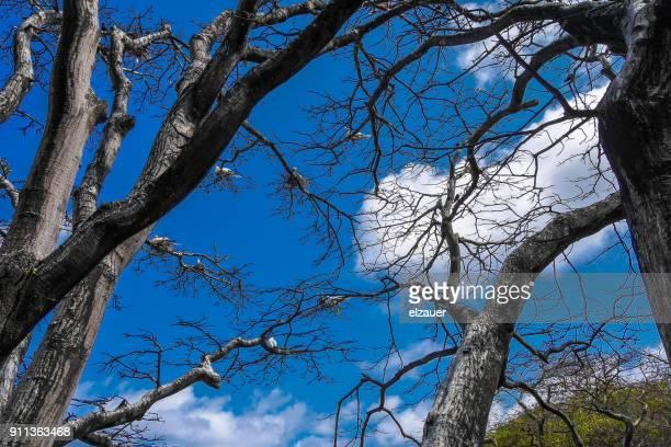 Birds in the Tree