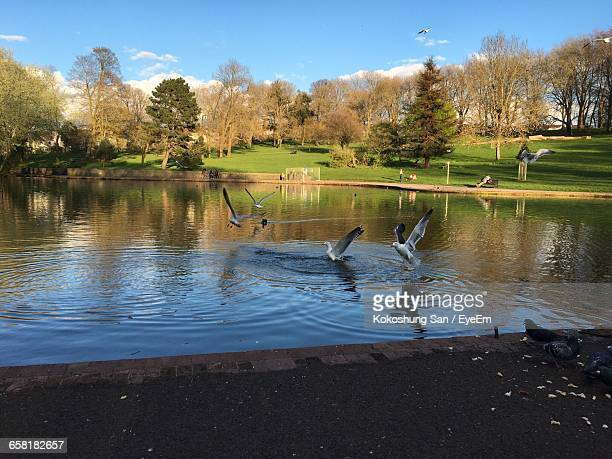 Birds In The Water In A Park