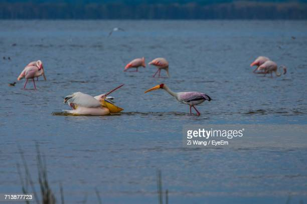 birds in the wild - lake nakuru stock photos and pictures