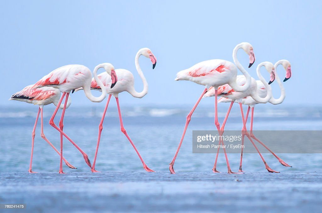 Birds In Water : Stock Photo