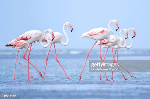 birds in water - flamingo stock photos and pictures
