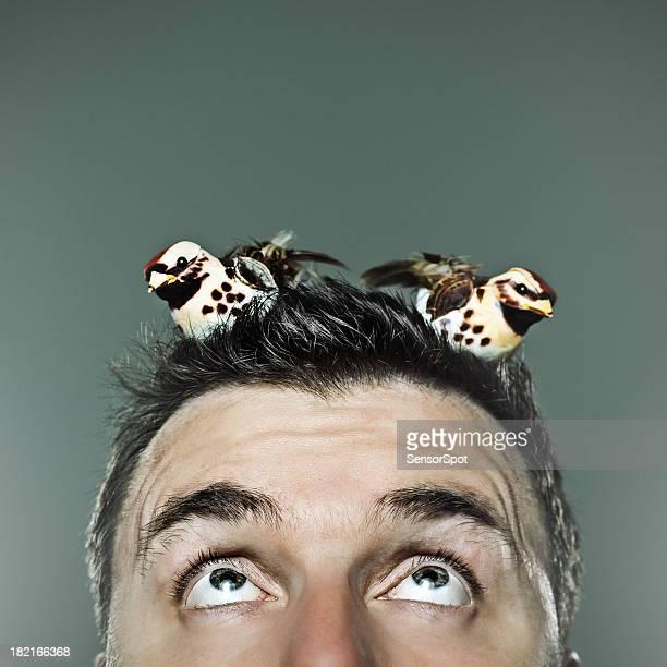 Oiseaux dans votre tête