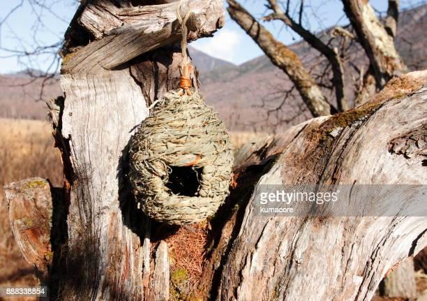 Bird's nest hanging a dead tree