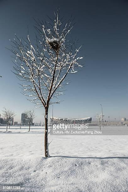 bird's nest in bare tree with distant view of beijing national stadium (birds nest), beijing, china - stadio olimpico nazionale foto e immagini stock