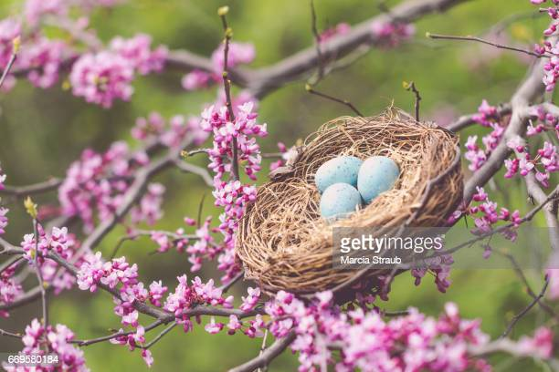 Bird's Nest Nestled on the Redbud Branch