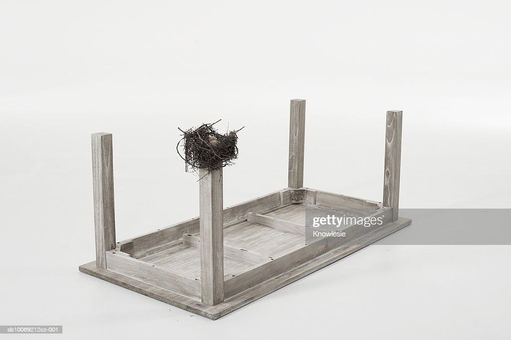 Bird's nest on leg of table set upside down against white background : Stockfoto