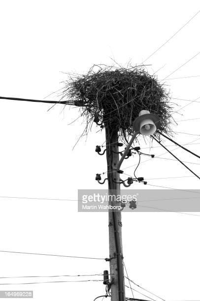 Birds nest on telephone pole