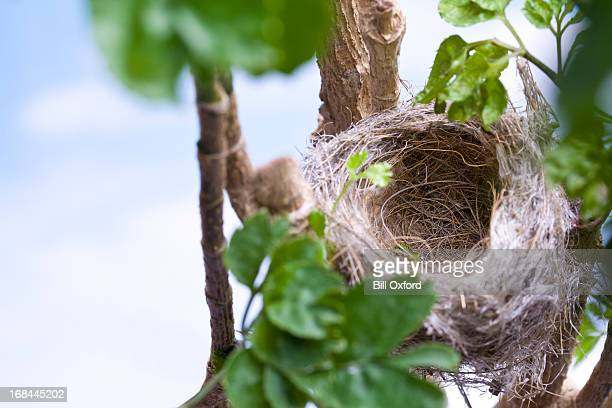 bird's nest - birds nest stock photos and pictures
